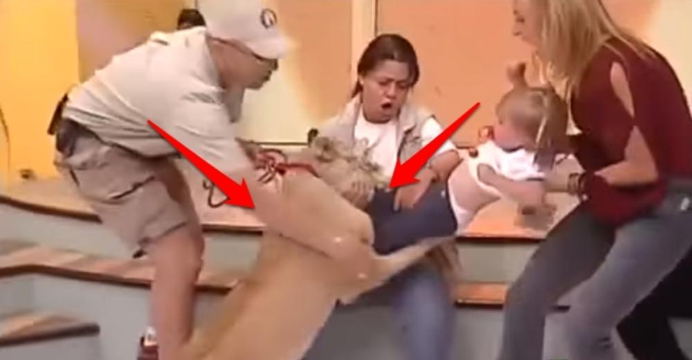 leon-ataca-a-nina-durante-programa-de-tv-mexico