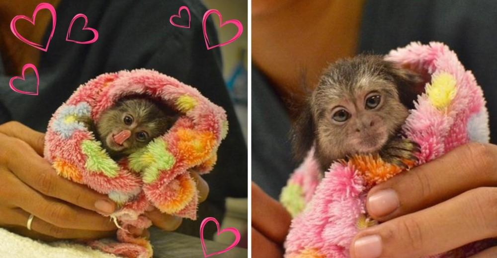 mono-bebe-rescatado-tailandia