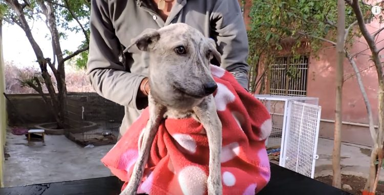 perrita-rescatada-animal-aid-amarrada-cuello1