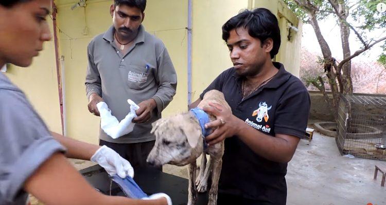 perrita-rescatada-animal-aid-amarrada-cuello10