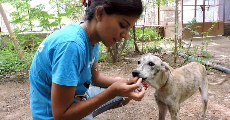 perrita-rescatada-animal-aid-amarrada-cuello14