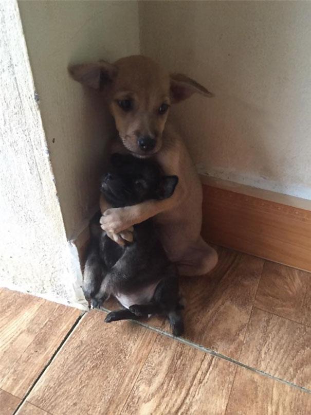 perritos-callejeros-abrazados-1