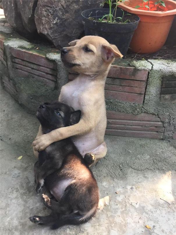 perritos-callejeros-abrazados-2
