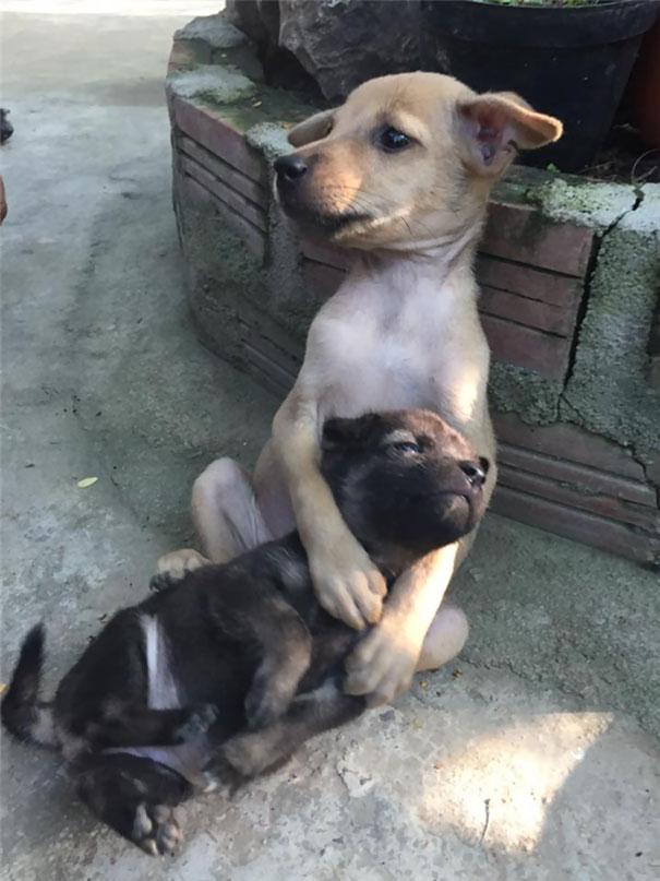 perritos-callejeros-abrazados-3