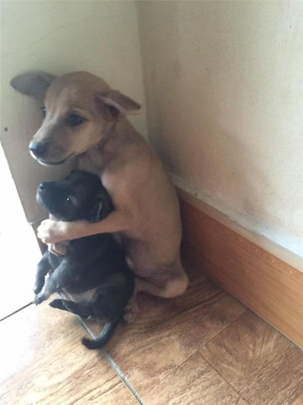 perritos-callejeros-abrazados-4