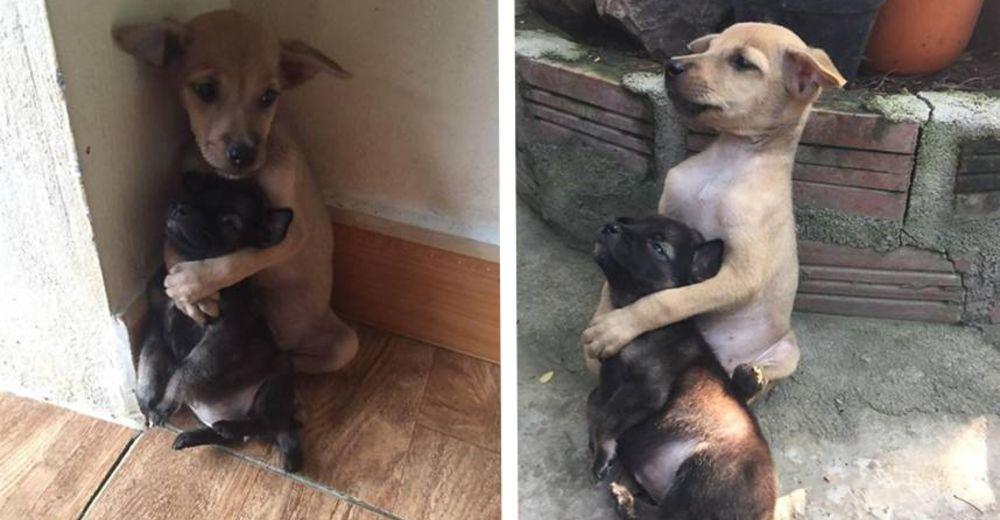 Ellos sufrieron juntos en la calle y ahora no dejan de abrazarse desde que fueron rescatados