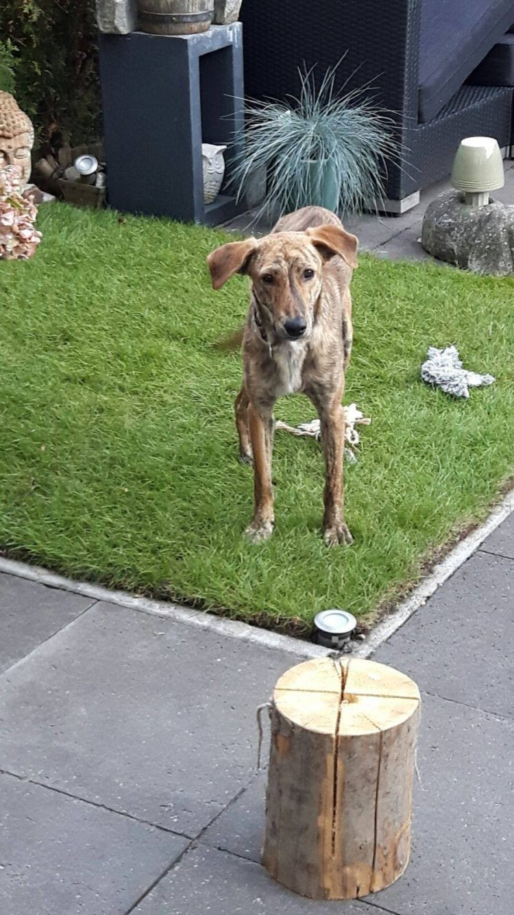 perro-espina-rota-5