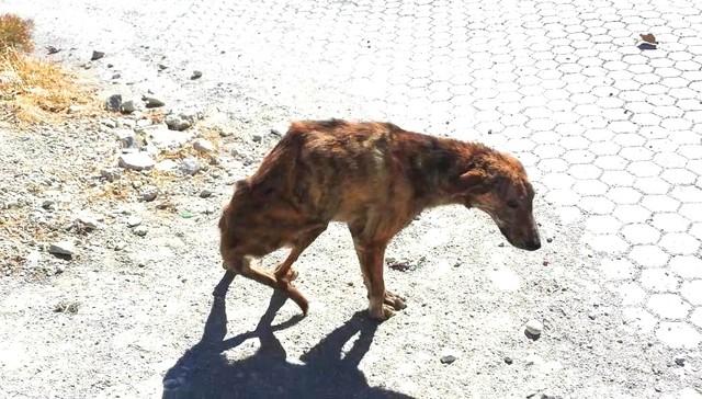 perro-espina-rota-6