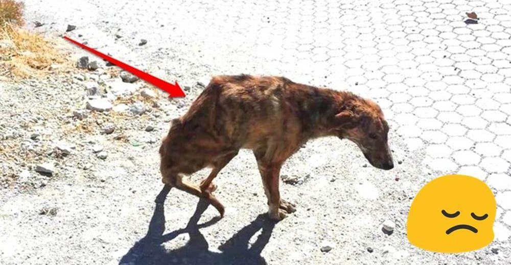 perro-espina-rota-id