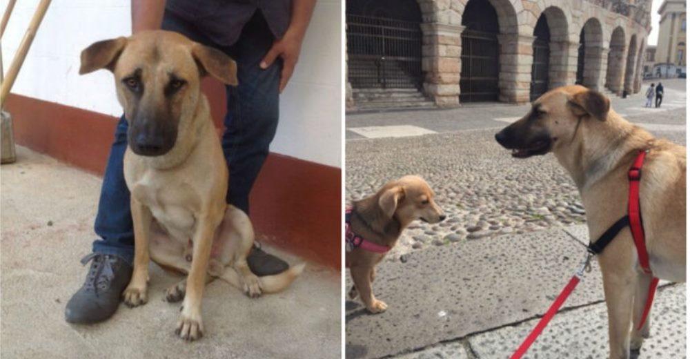 perro-masacre-tailandia-rescatado