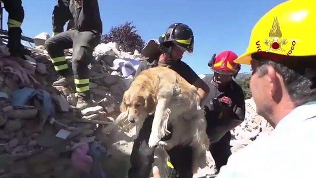 perro-rescatado-terremoto-de-italia3