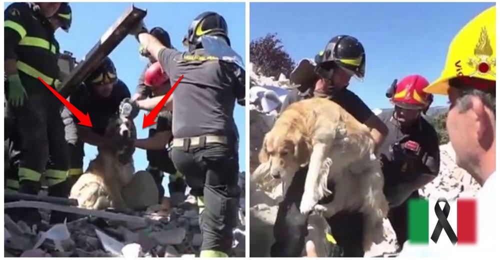 perro-rescatado-terremoto-de-italia32- Copy