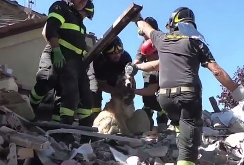 perro-rescatado-terremoto-de-italia5