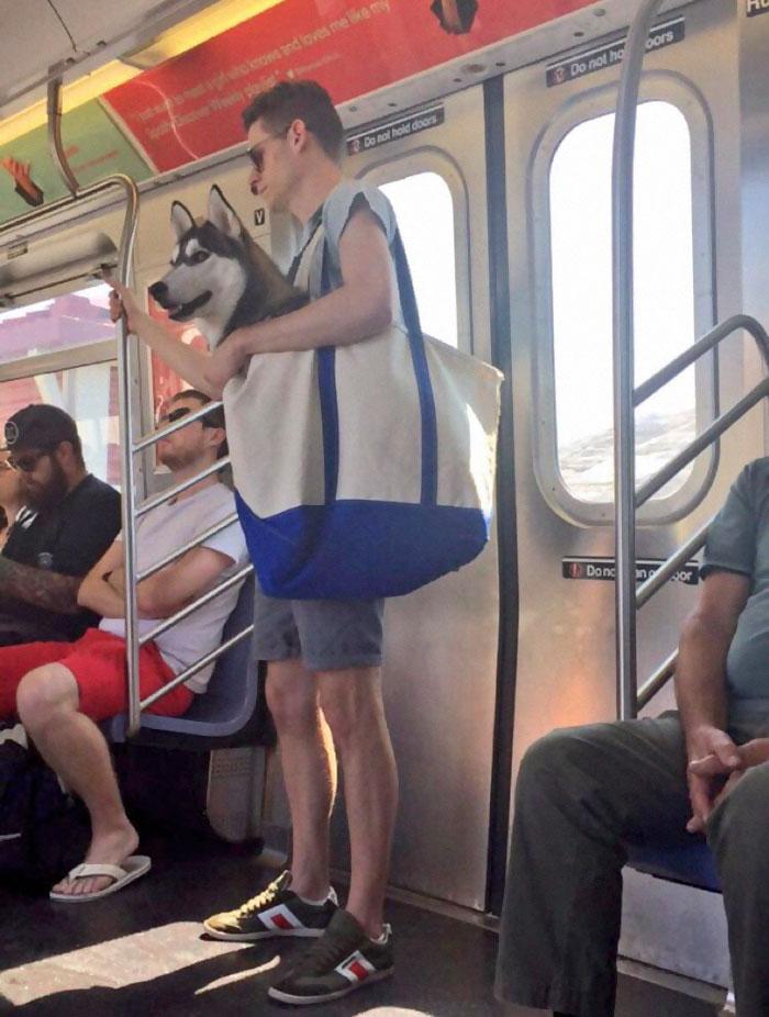 perros-metro-1