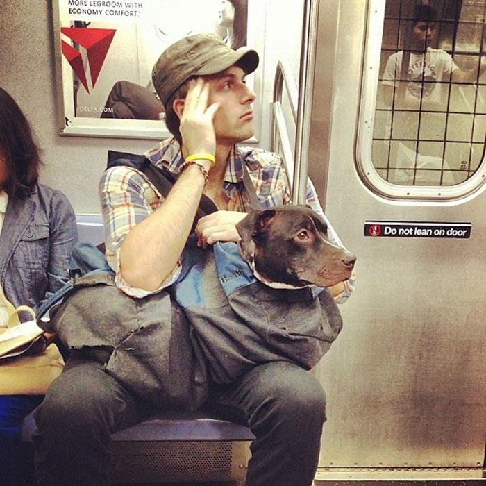 perros-metro-3