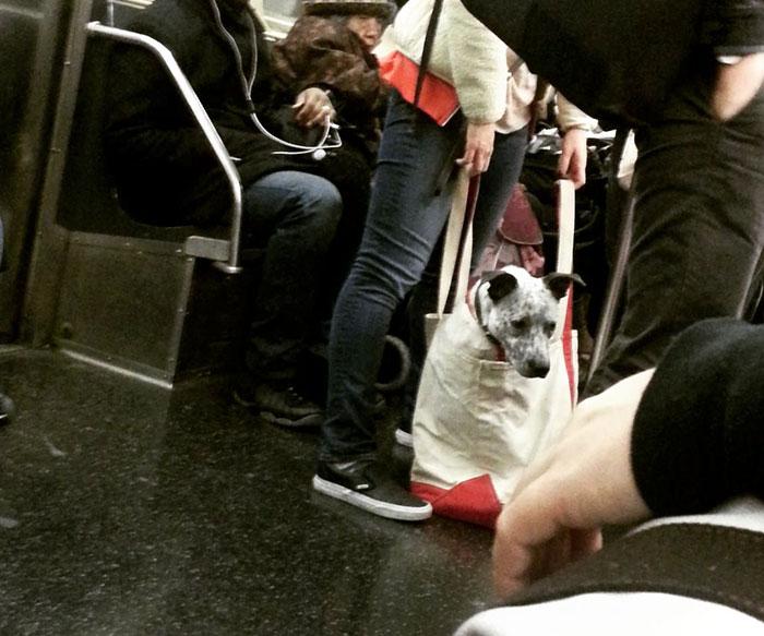 perros-metro-4