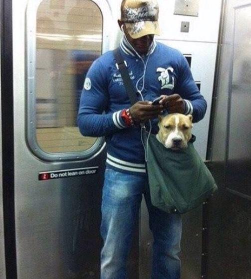 perros-metro-5