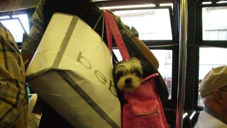 perros-metro-7