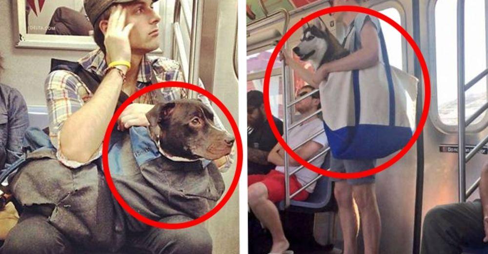 perros-metro-id