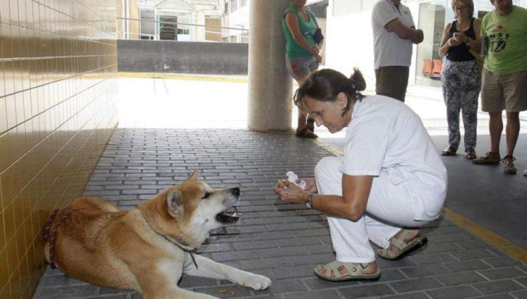 reencuentro-perrito-hospital3