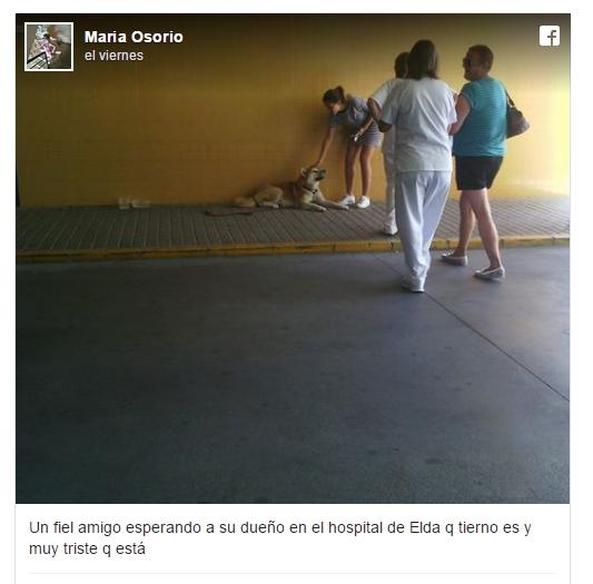 reencuentro-perrito-hospital5