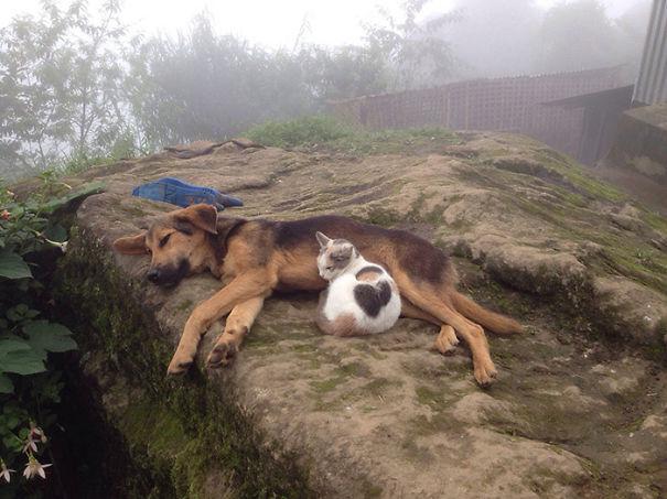 tiernos-gatos-y-perros-10