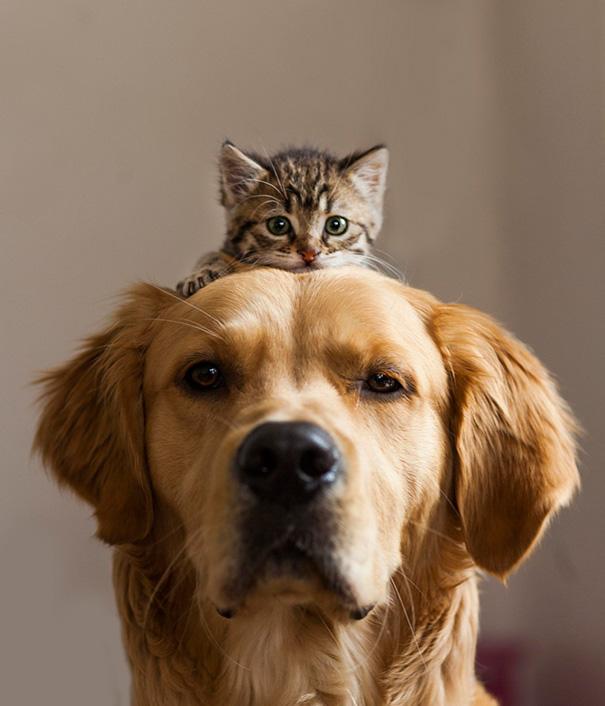 tiernos-gatos-y-perros-11
