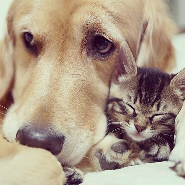 tiernos-gatos-y-perros-13