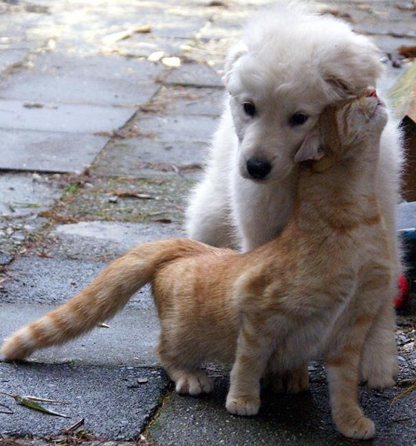 tiernos-gatos-y-perros-14