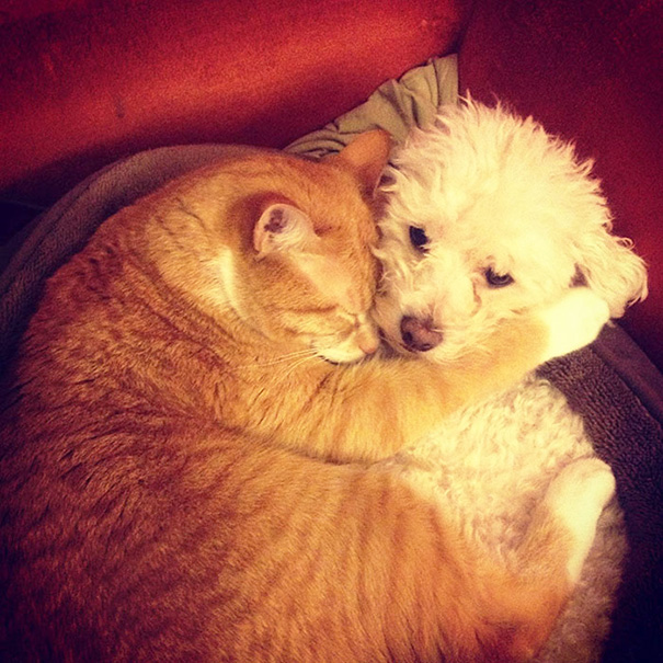 tiernos-gatos-y-perros-15