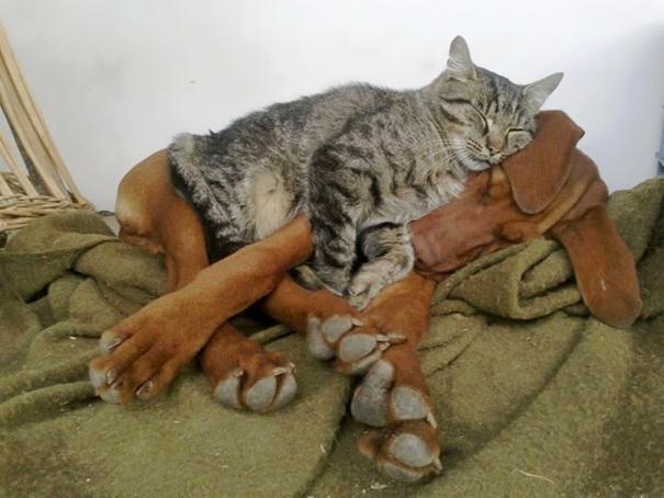 tiernos-gatos-y-perros-17
