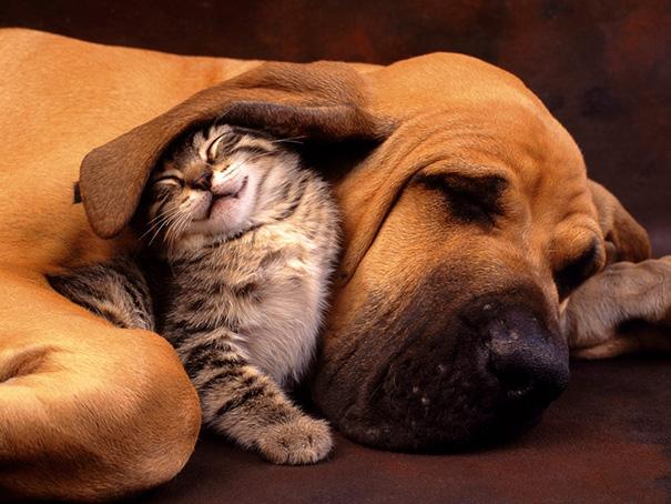 tiernos-gatos-y-perros-2