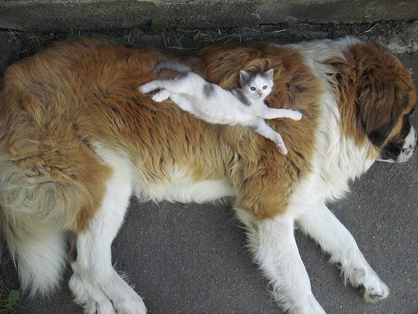 tiernos-gatos-y-perros-6