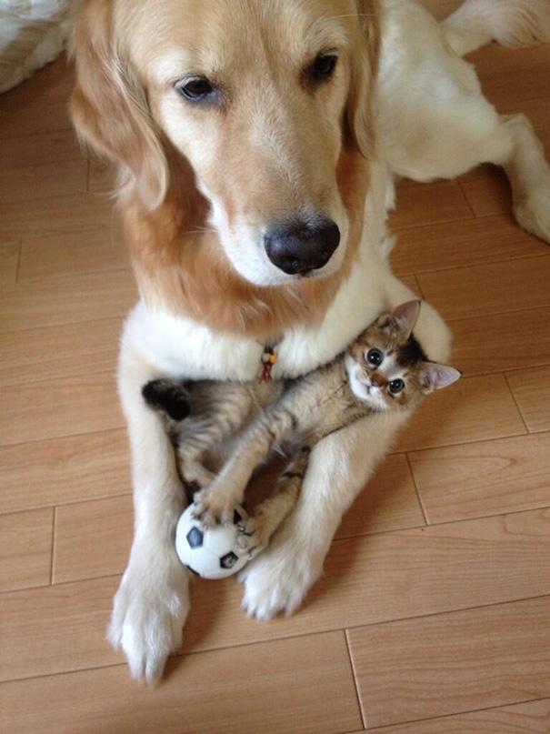 tiernos-gatos-y-perros-7