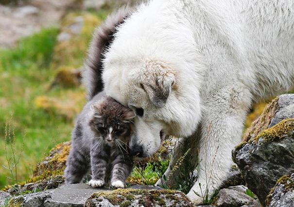 tiernos-gatos-y-perros-8