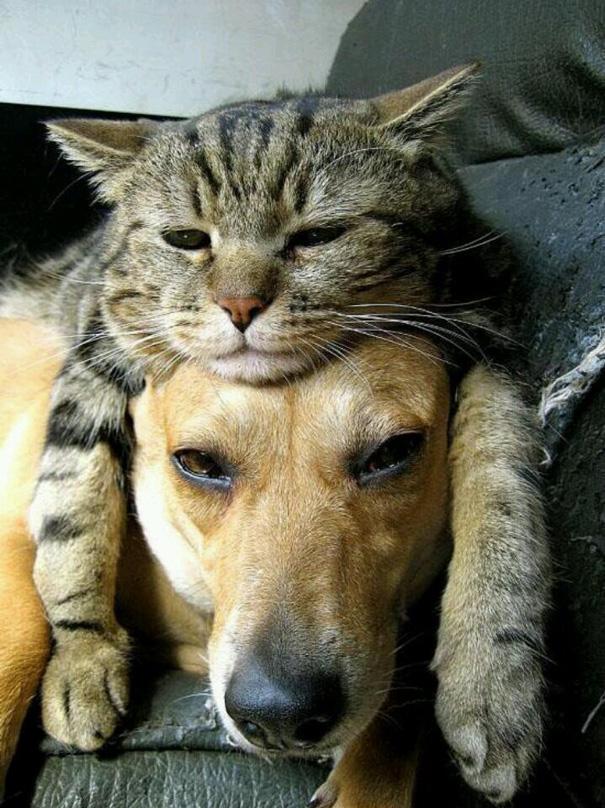 tiernos-gatos-y-perros-9