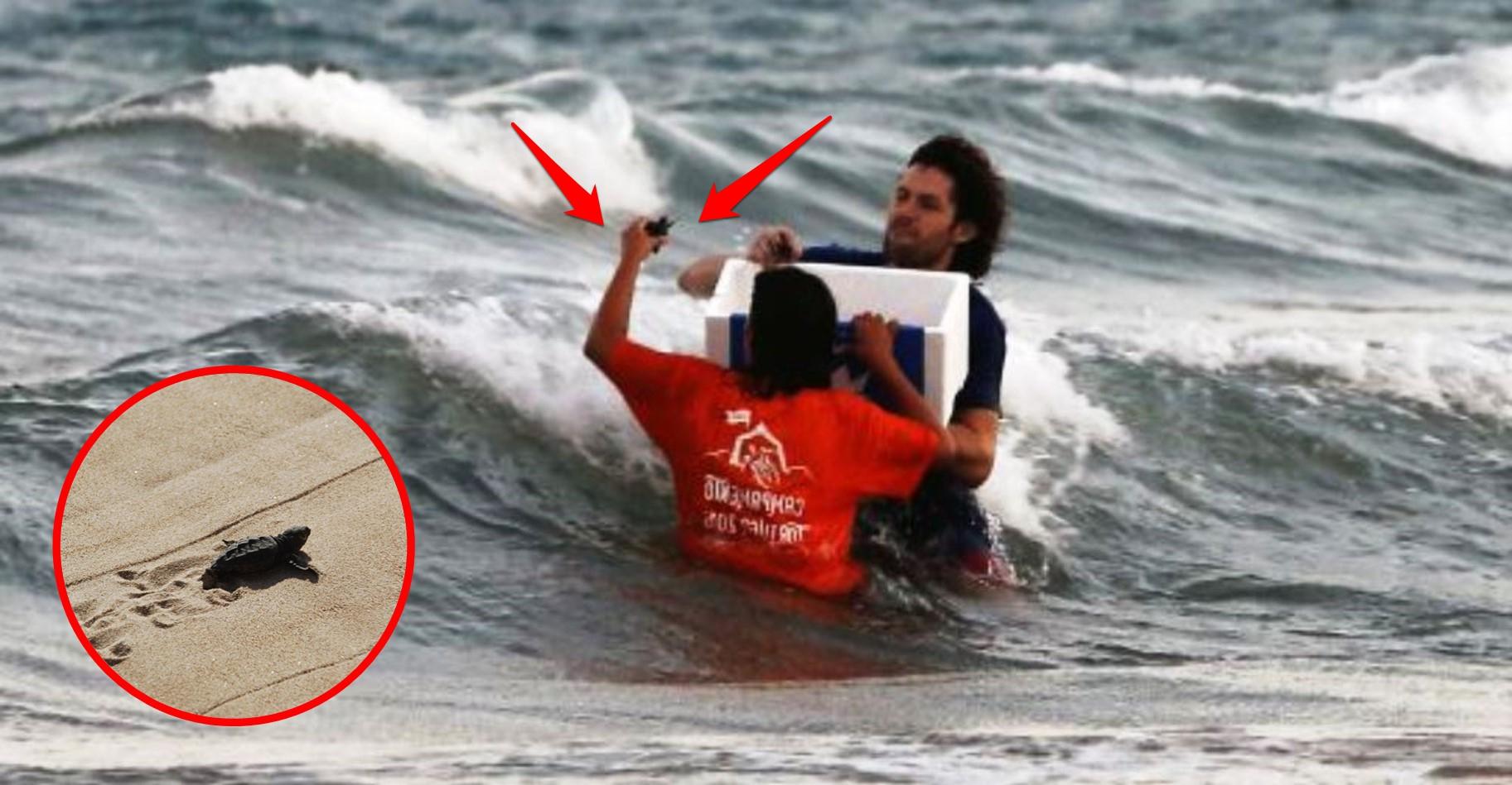 tortugas-recien-nacidas-liberadas-al-mar-valencia