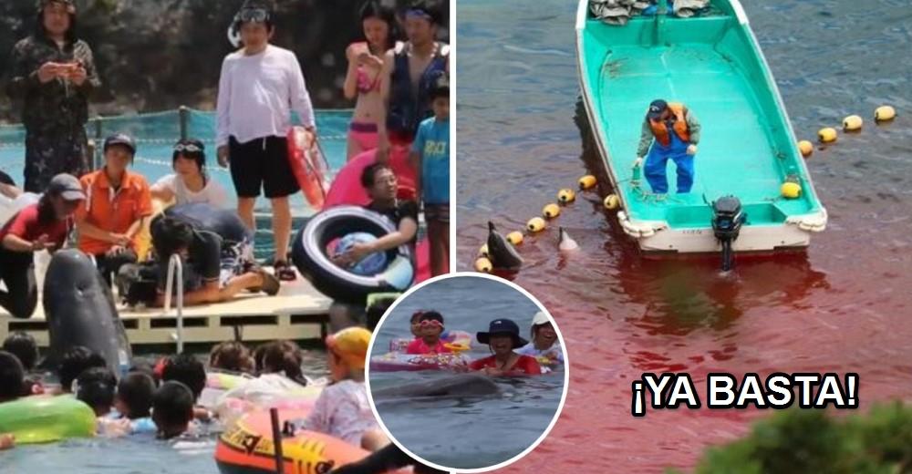 turistas-nadan-con-delfines-antes-de-ser-masacrados