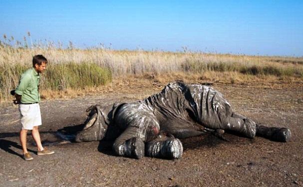 africa-ha-perdido-un-tercio-de-sus-elefantes-en-tan-solo-7-anos-4