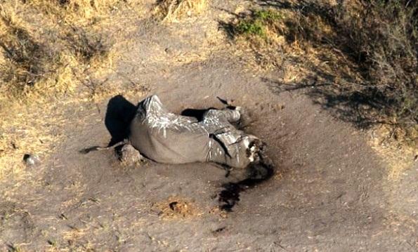 africa-ha-perdido-un-tercio-de-sus-elefantes-en-tan-solo-7-anos-7