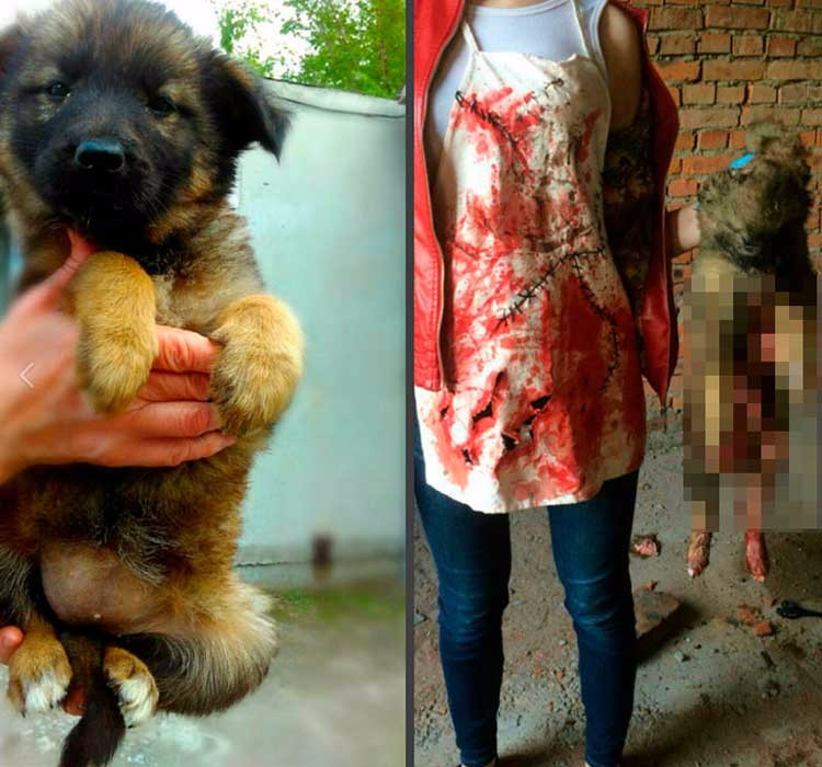 adolescente-rusa-tortura-animales-07