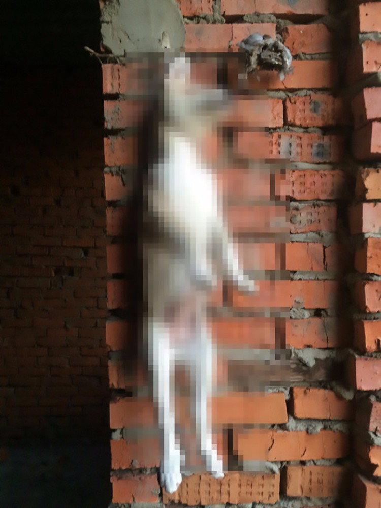 adolescente-rusa-tortura-animales-09