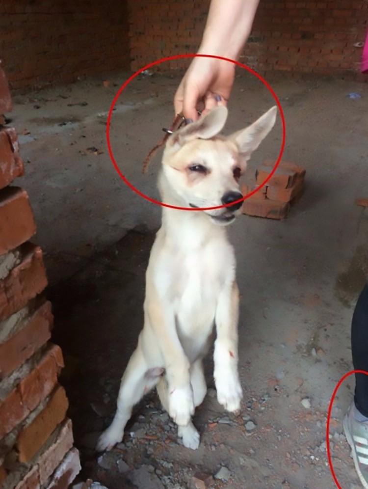 adolescente-rusa-tortura-animales-10