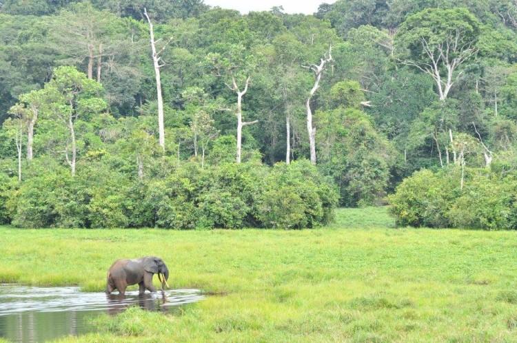 alerta-caza-marfil-elefante-02