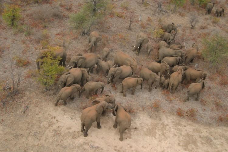 alerta-caza-marfil-elefante-07