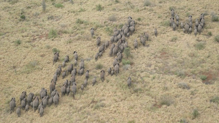 alerta-caza-marfil-elefante-08