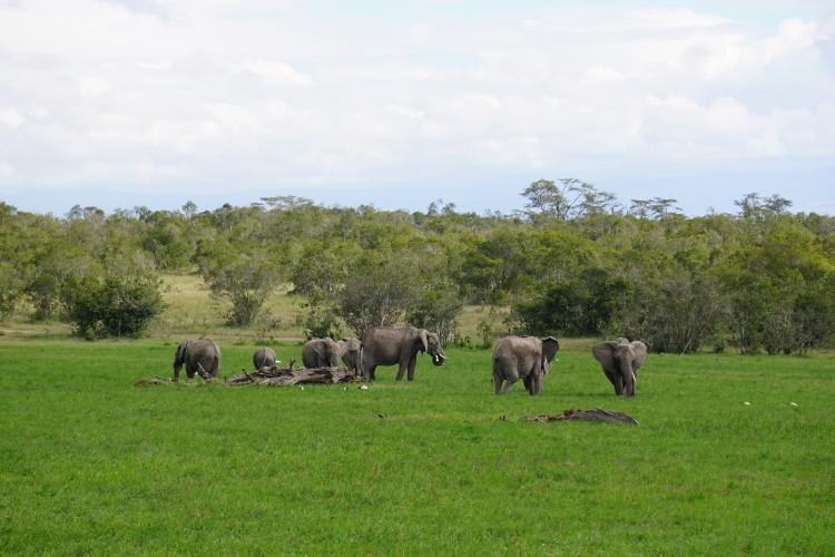 alerta-caza-marfil-elefante-13