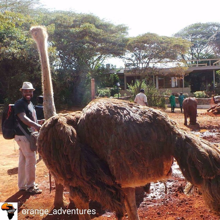 avestruz-cuida-elefantes-05