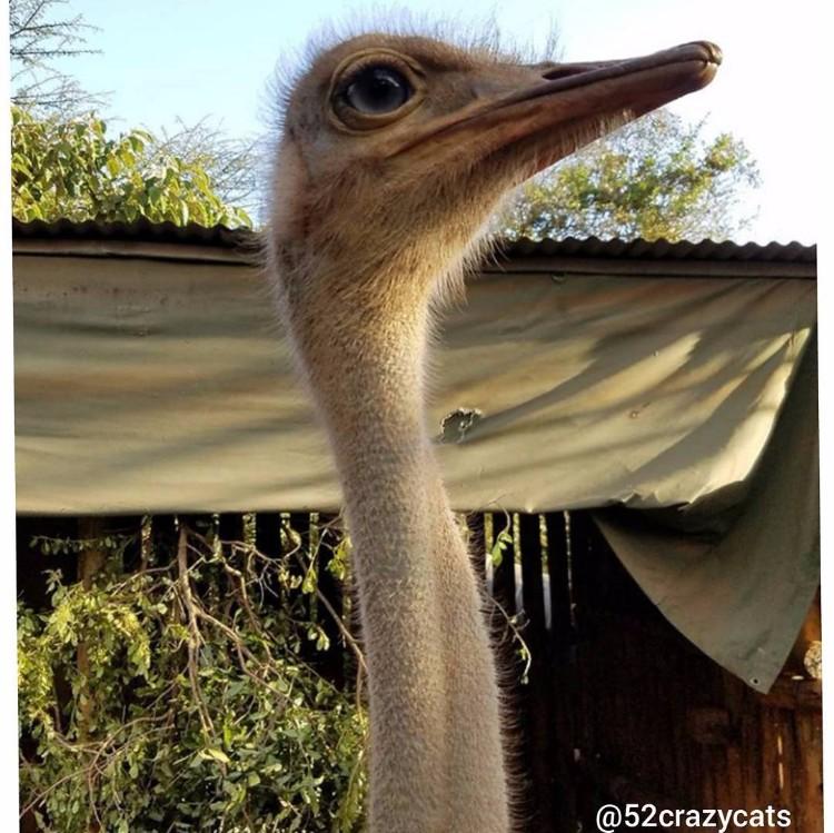 avestruz-cuida-elefantes-06