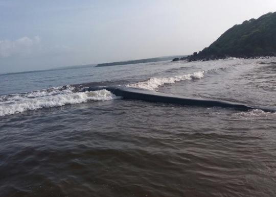 ballena-de-20-toneladas-puede-volver-al-mar-gracias-al-rescate-exitoso-de-grupo-de-personas-en-madban-india-2